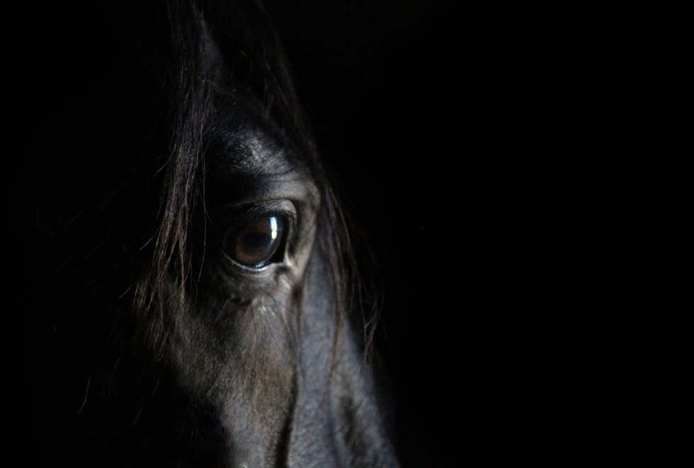 Thoughtful horse eye portrait..jpg
