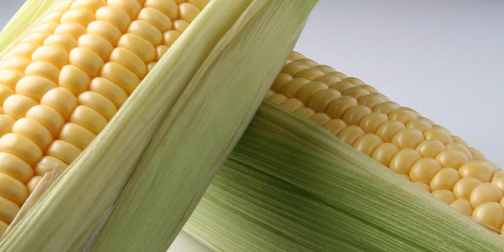 Corn Glean August 1