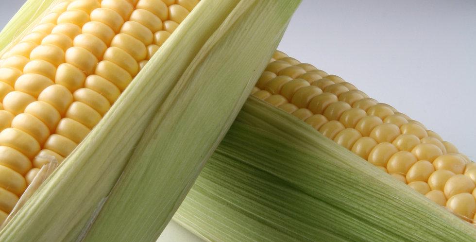 Organic Michigan Bicolor Sweet Corn (2 ears)