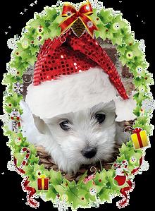 JOJO santa hat with frame4.png