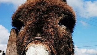 Have you heard about the donkey at the opera? Sounds like the start of a joke!!!!!! Read on...