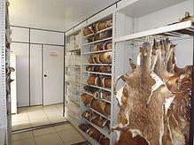 Museu de Cervídeos Nupecce