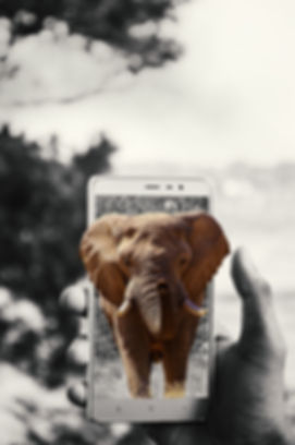 elephant-2243473_1920 (1).jpg
