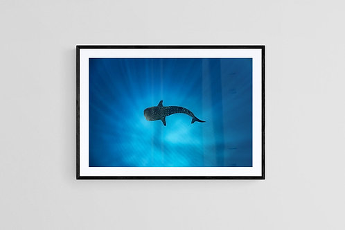 Crystal Clear Water of Ningaloo, Framed Print
