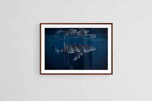 Reflections, Framed Print