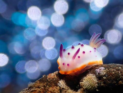 Bokeh Nudibranch