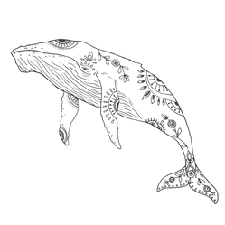 WHALE-01_edited.png