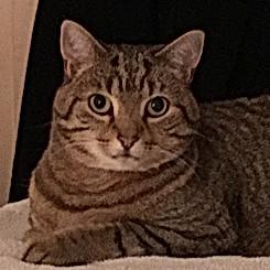 Nala, my Grandcat!