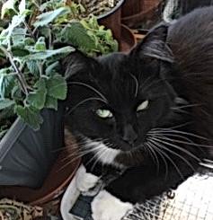 Floyd loves his catnip