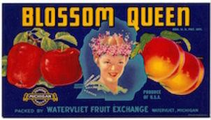 blossom queen logo.jpeg