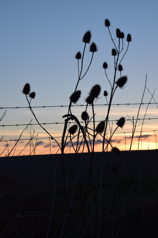Sunset Plants Oxford Acupuncture Charley Roux
