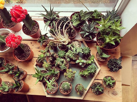 I love needles of all kinds 🌵🌵🌵_•_•_•