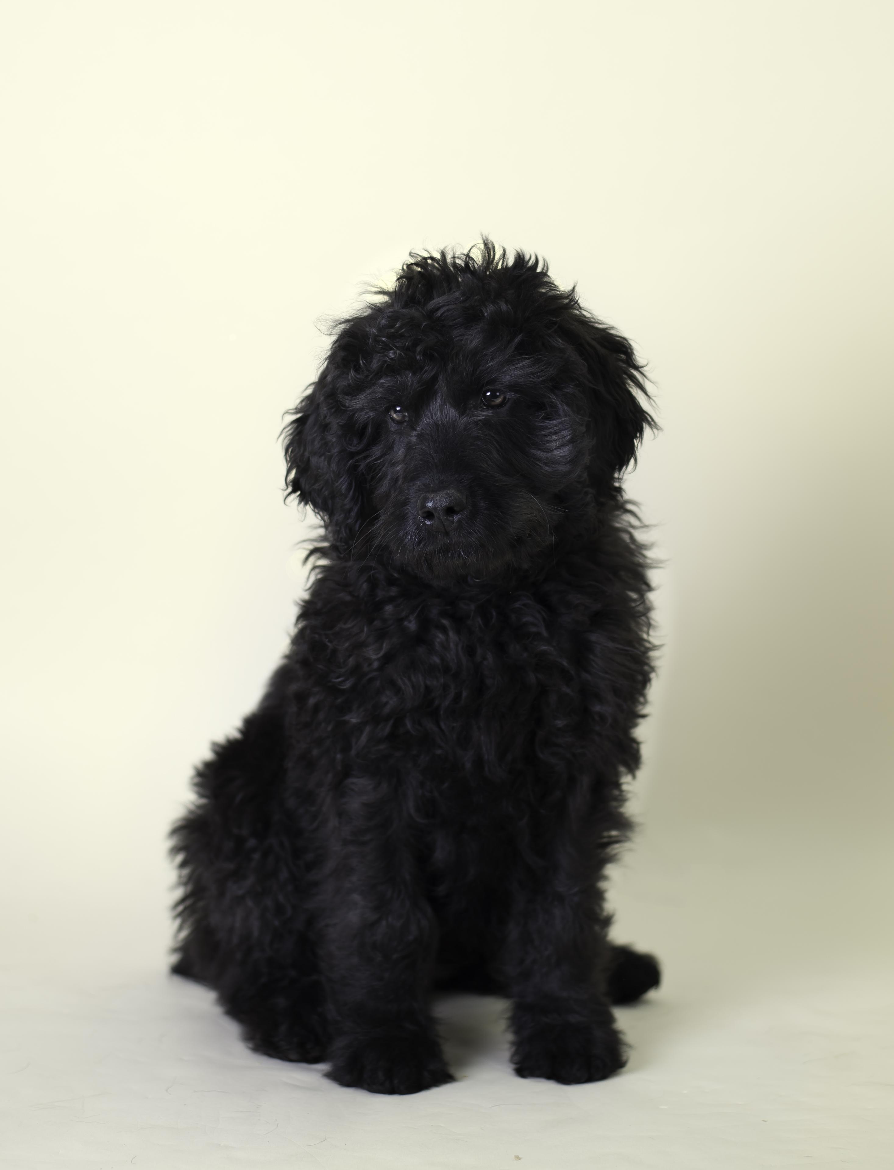 Utah dog photography, puppy