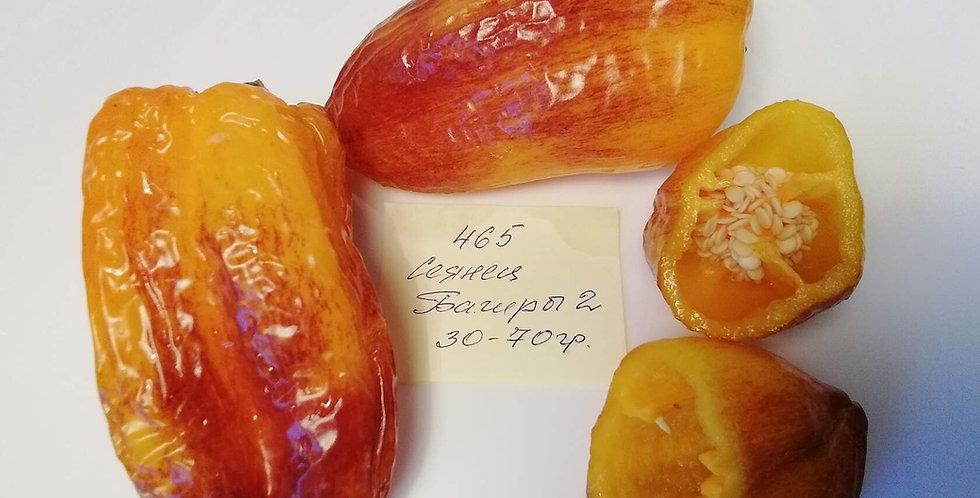 П 465 - Bagira's Seedling 2  / Сеянец Багиры 2