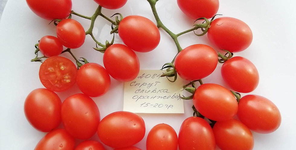 2084 - Sprout plum orange \ Спрут сливка оранжевая