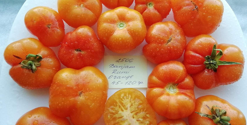 2506 - Banjam Rumi Orange \ Бенжан Руми оранжевый