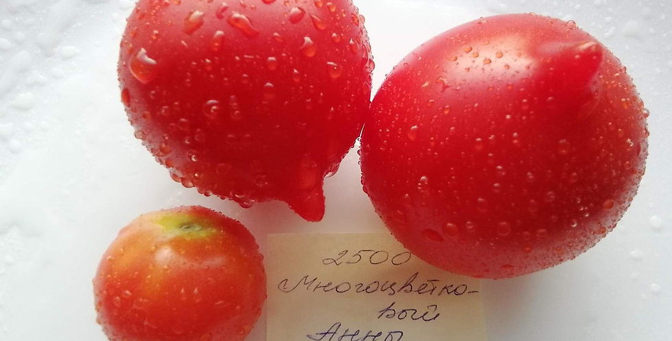 2500 - Anna's multiflora \ Многоцветковый Анны