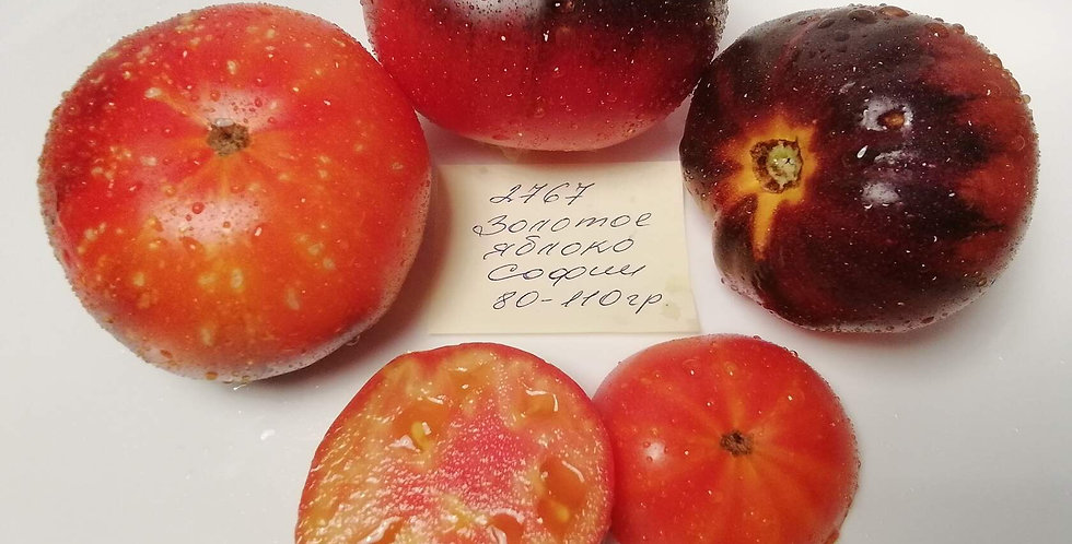 2767-  Sofia's Golden Apple / Золотое яблоко Софии