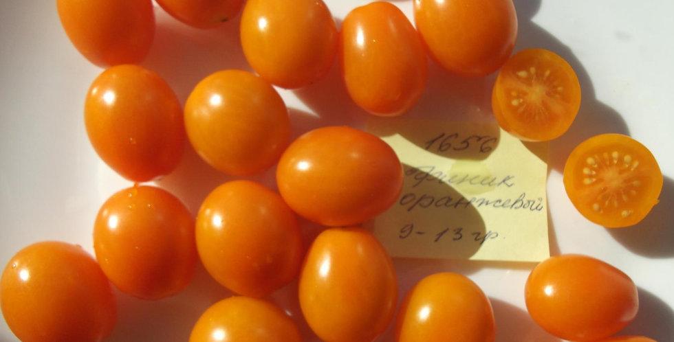 1656 - Orange fenec \ Финик оранжевый