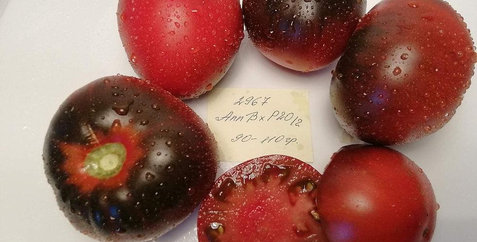 2967-  Ann B xP20-2