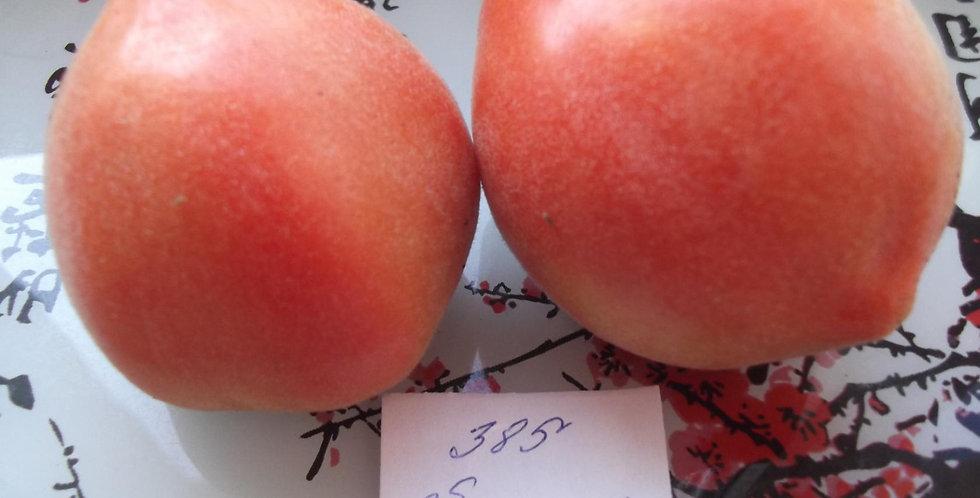 385 - Apricot boot \ Абрикосовый лапоть