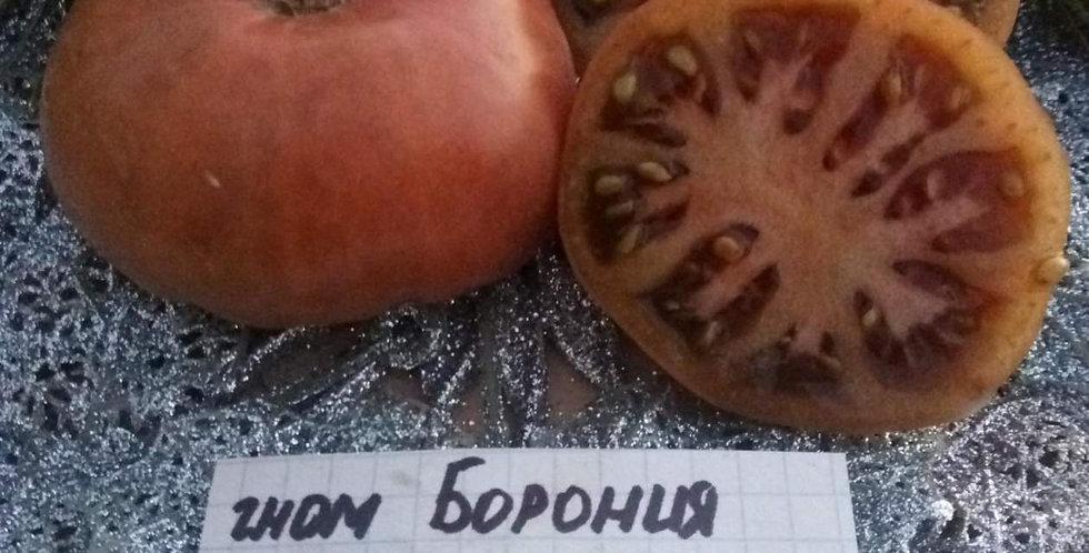 97-Dwarf Boronija / Гном Борония