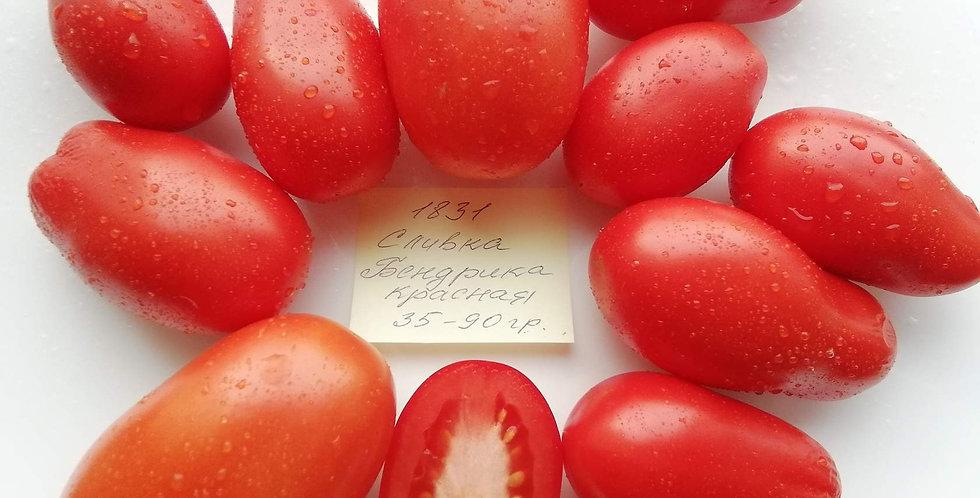 1831 - Bendric's red plum Сливка Бендрика красная