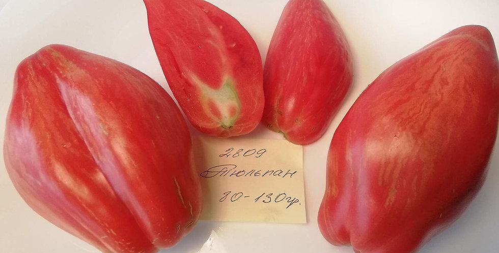 2809-  Tulip / Тюльпан