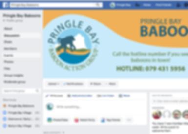 Pringle Bay Baboons Facebook Group