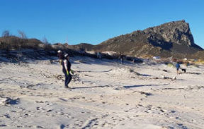 Pringle Bay beach dune rehabilitation in progress