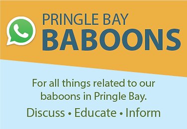 Pringle Bay Baboons WhatsApp group