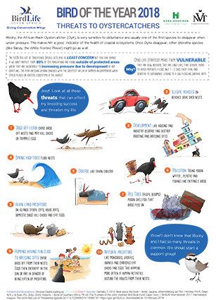 Threats to Oystercatchers Fact sheet