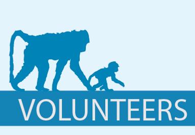 Pringle Bay Baboons Volunteers