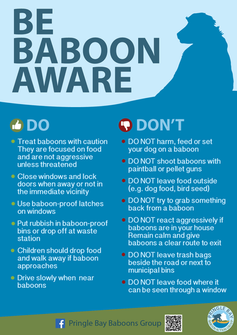 BaboonAwarePoster_No1_A4_nobleed.png