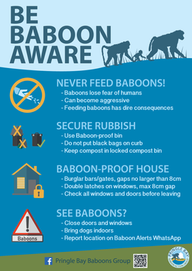 Be Baboon Aware Poster the 4 Basic
