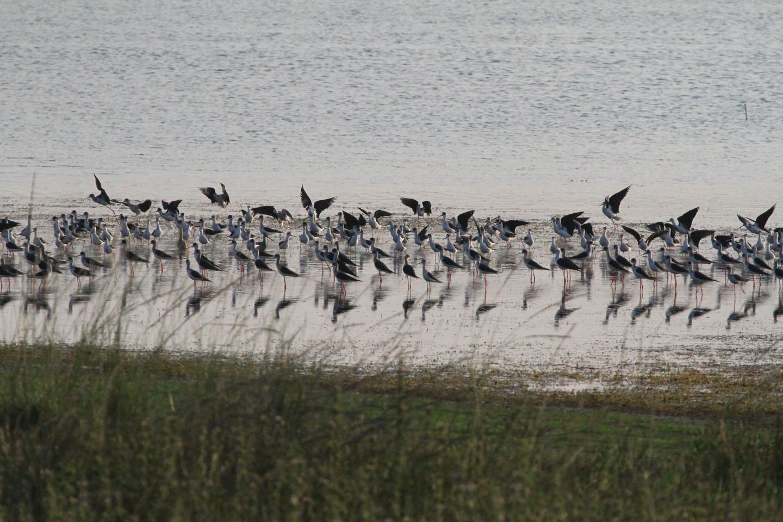 Vaduvoor Bird Sanctuary