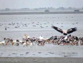 Post-Gaja, change in pattern of arrival of migratory birds