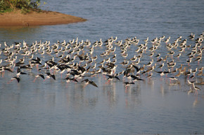 Rare spottings during Synchronized bird census by BCF INDIA's volunteers