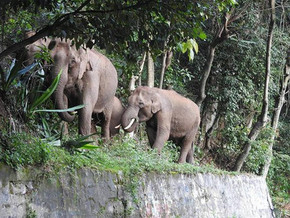 50 hectares in the critical Kallar elephant corridor declared as private forest