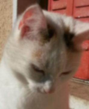 Je suis un chat. Mon nom est Schrödinger. Je suis un chat philosophe