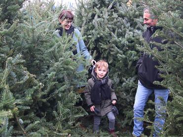 Snoepboom in KerstDoolhof Weert