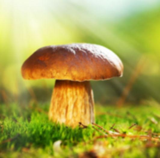 Mushroom fungus yeast
