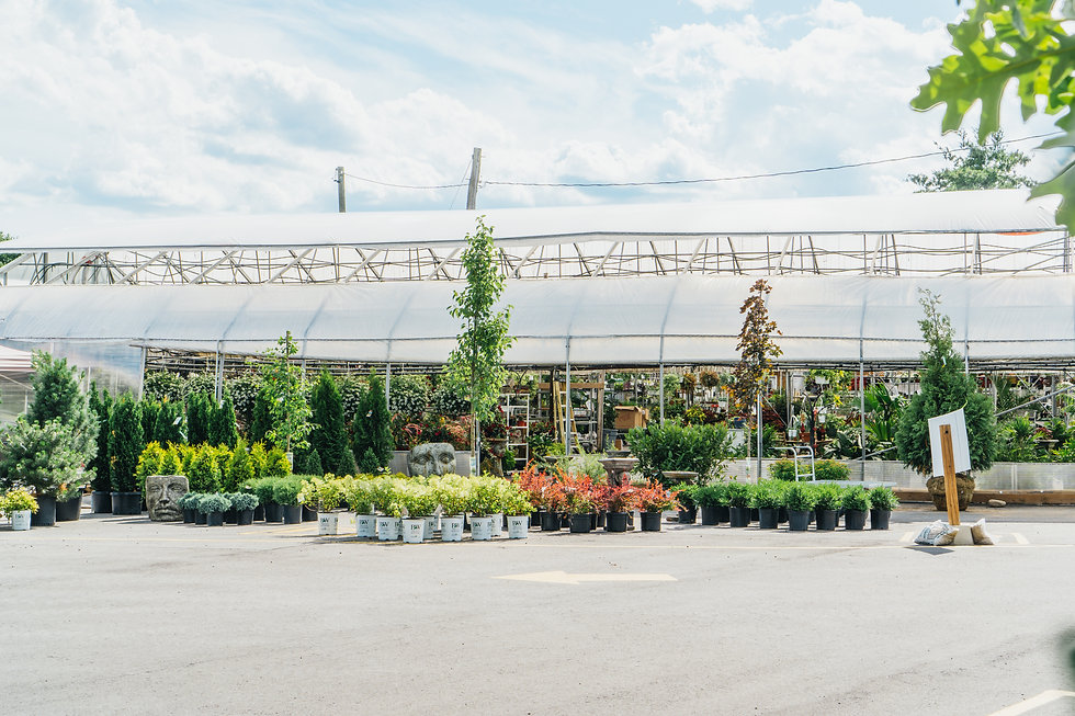 best orleans garden center.jpg