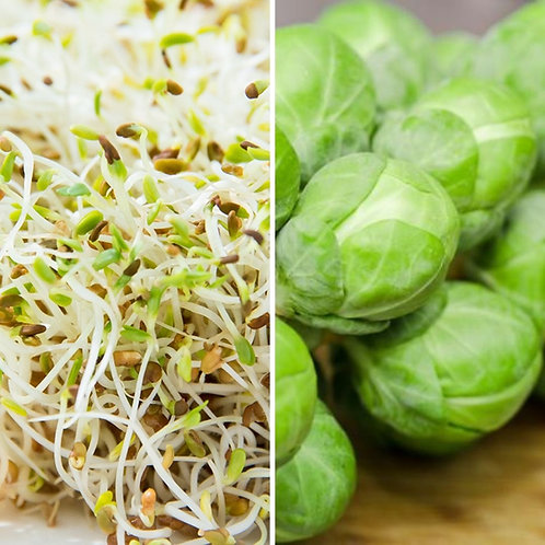 Sprouts & Brussel Sprout Seeds