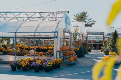 Garden Centre with Fall plants and pumpkins