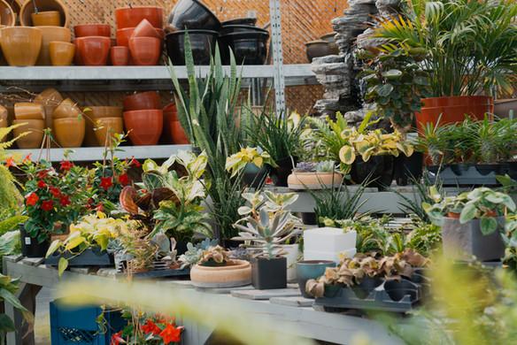 Indoor Plants and Succulents