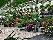 Tropical Greenhouses in Ottawa