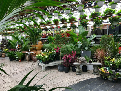 Tropical Plants in Ottawa
