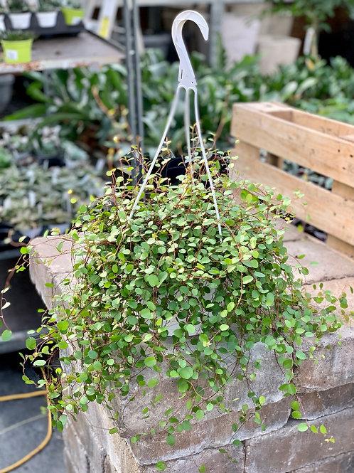 Wire Vine Hanging Basket