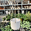 "Thumbnail: 5"" White Ceramic & Twine Hanging Planter"